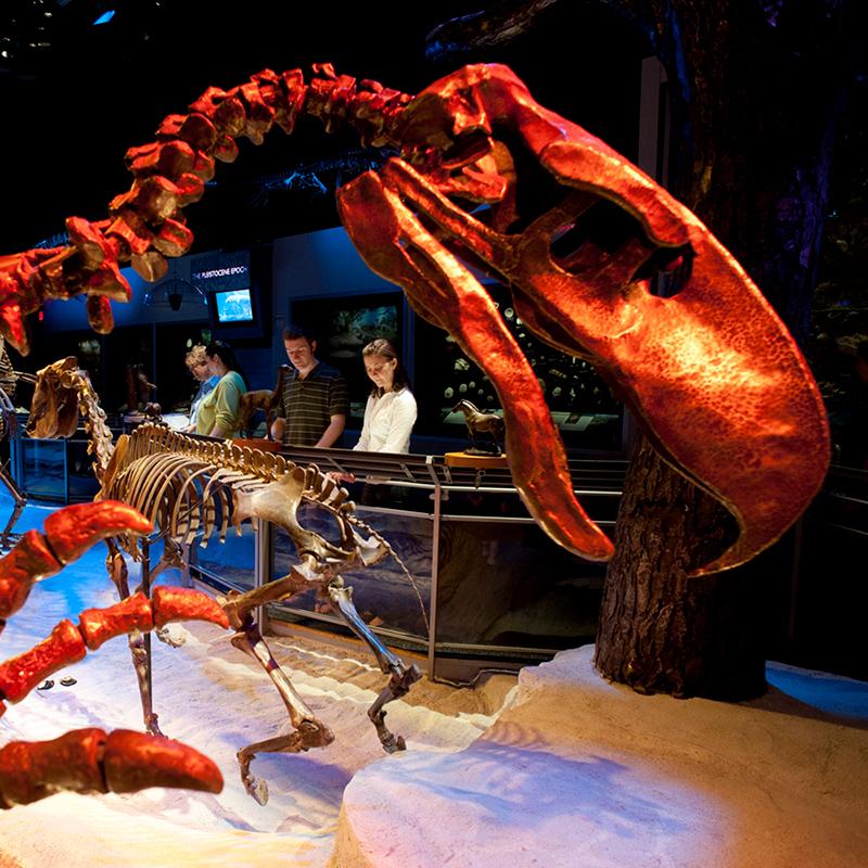 Museum 360°: Giants of Florida's Prehistoric Past