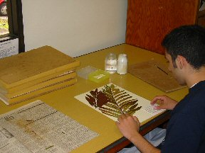 Of plant specimens for deposit as herbarium vouchers annotations ccuart Image collections