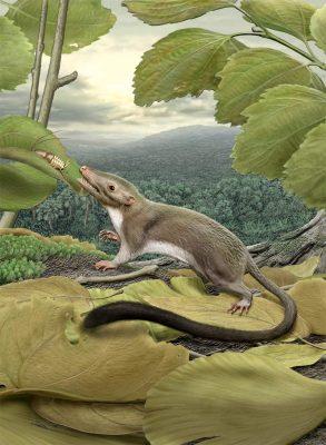 ancestor-placental-mammals