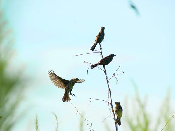 Birds at Paynes Prairie, header
