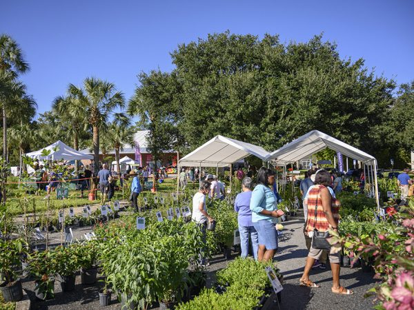ButterflyFest 2019 Plant Sale