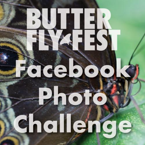 ButterflyFest