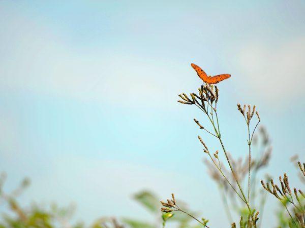 Butterfly on Prairie, header