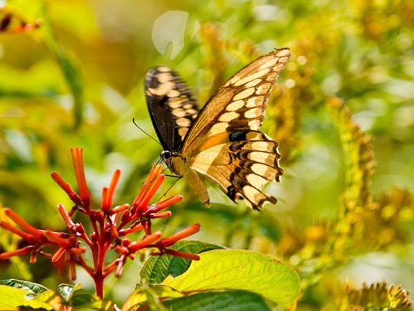 Butterfly polinator, event header