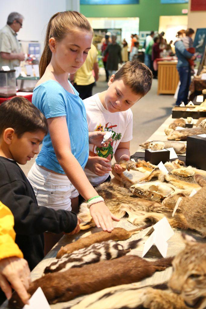 Kids petting pelts
