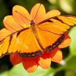 Orange butterfly, orange flower header