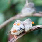 rainforest finches, header