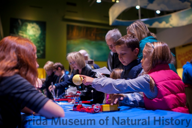 Starry Night. Florida Museum photo by Kristen Grace