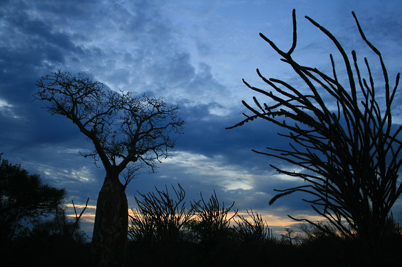 Madagascar, baobab trees