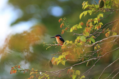 Madagascar bird