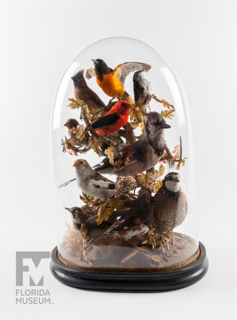 Songbird Bell Jar