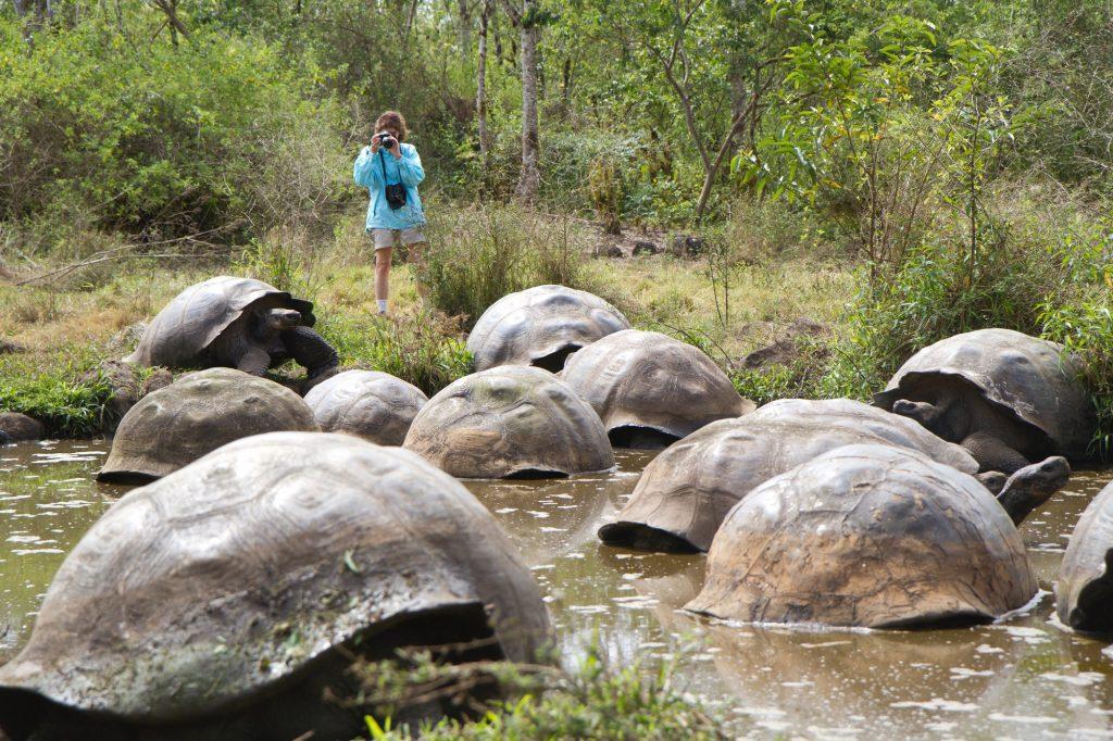 Tortoises on Galapagos Island