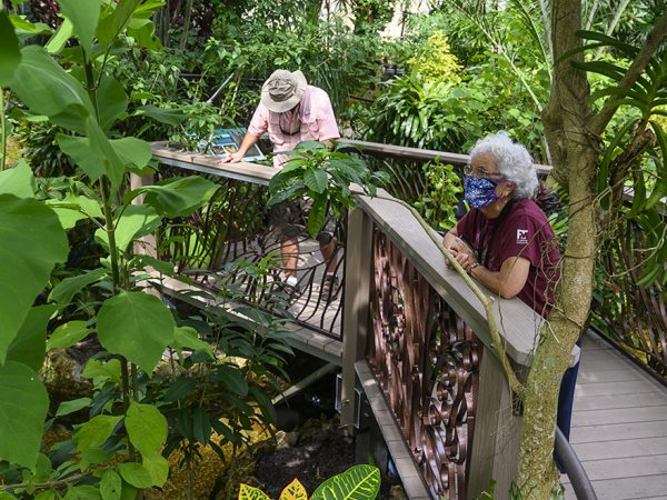 people in butterfly rainforest exhibit