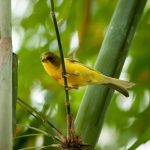Birds of the Butterfly Rainforest