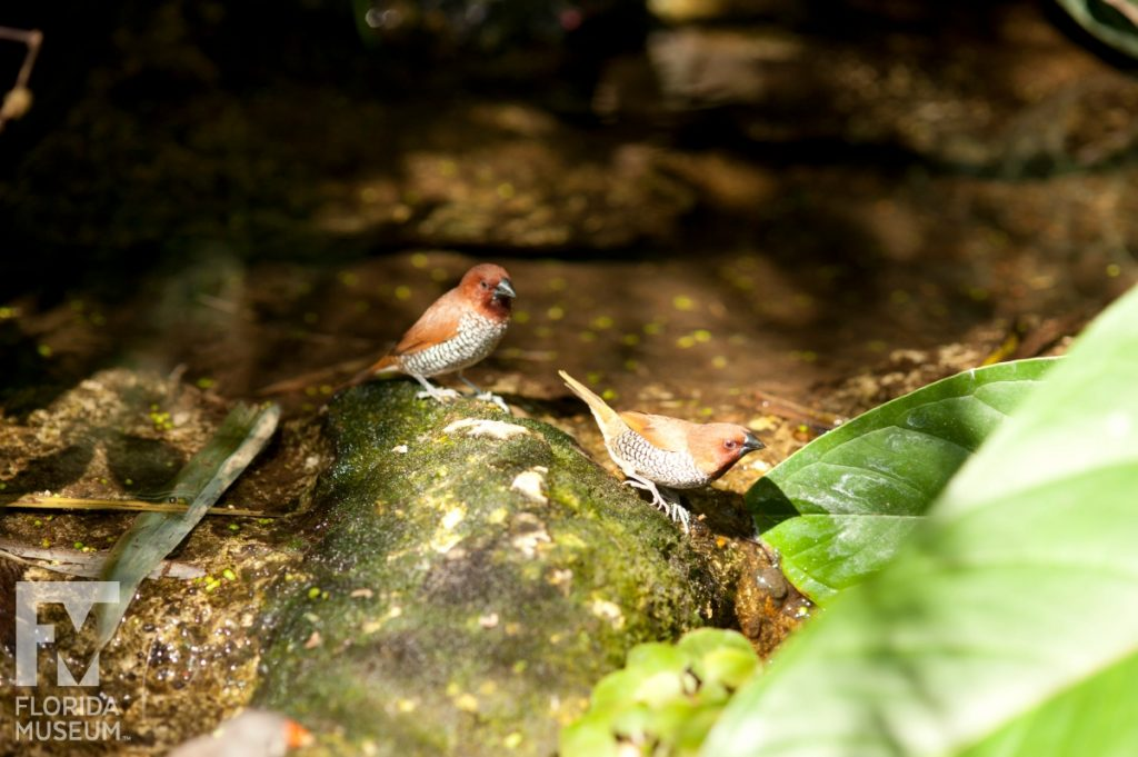 Birds of the Butterfly Rainforest