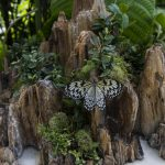 Penjing in the Butterfly Rainforest