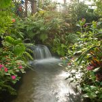 Butterfly Rainforest waterfall, half header