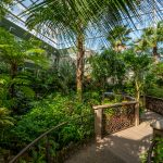 wide view of enclosed butterfly forest exhibit