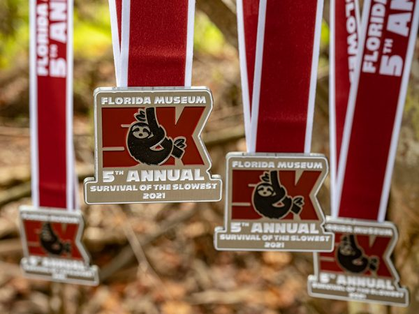 several race medals hanging from a branch