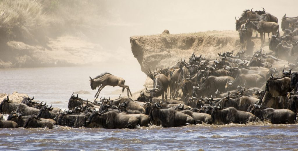 The annual Great Migration on the Mara River in Tanzania