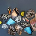 Butterfly Wing Collage