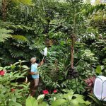 staff member catching butterflies with a net in the exhibit