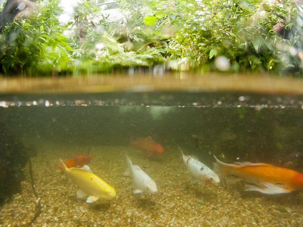 fish in butterfly rainforest exhibit
