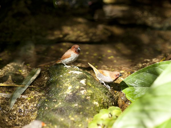 birds in butterfly rainforest exhibit