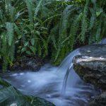 water feature in Kanapaha