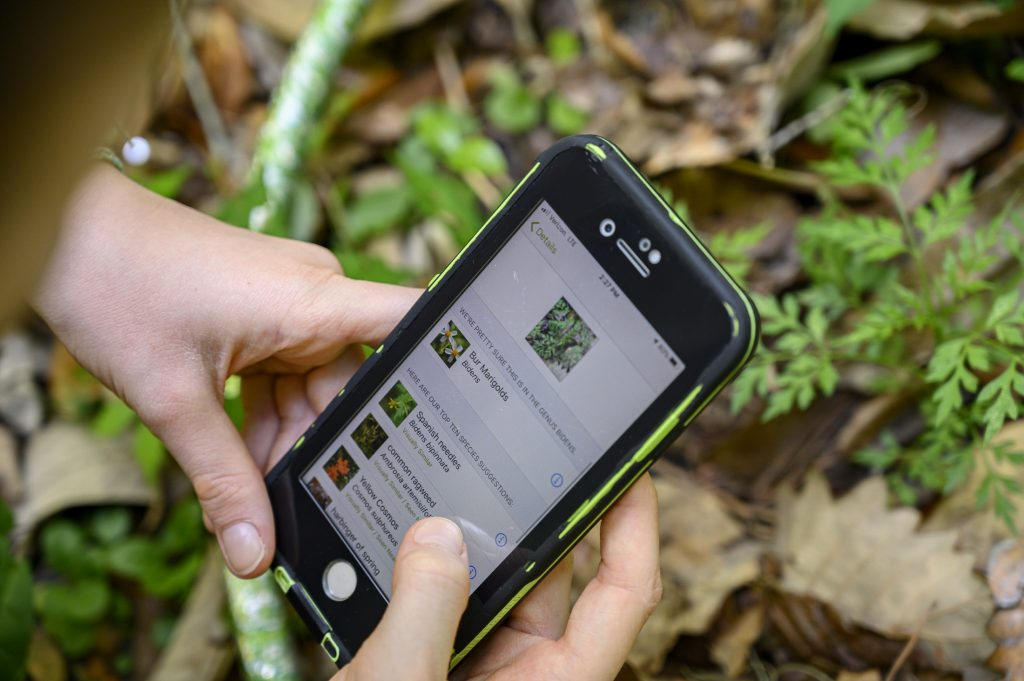 person outside using the iNaturalist App on a smartphone