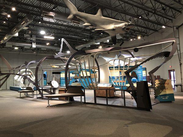 megalodon exhibit