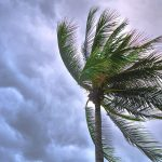 palm tree blowing in the wind against storm clouds