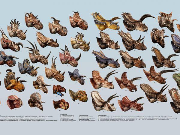 poster of illustrations of dozens of dinosaur heads