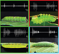 caterpillars with spectrograms