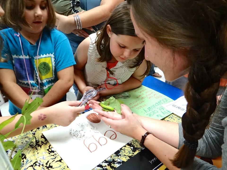 children examining a caterpillar