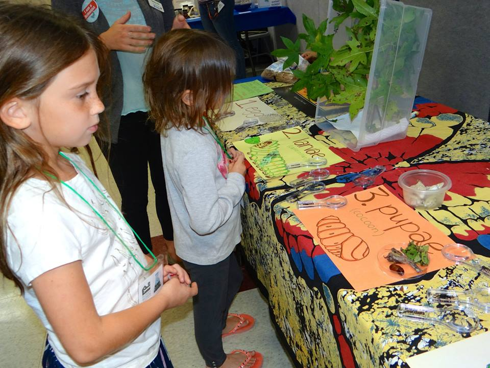 children learning about butterfly metamorphosis
