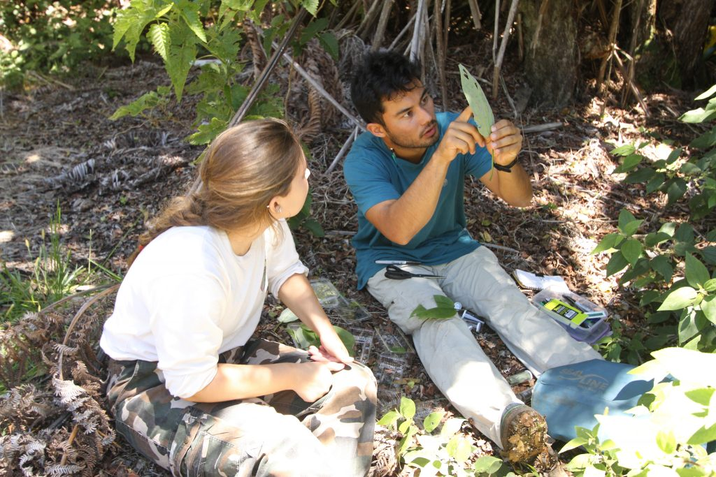 scientists examing leaf
