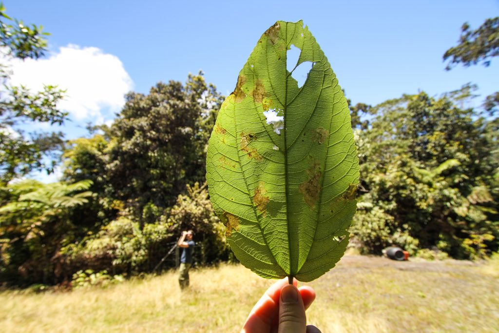 insect eaten leaf