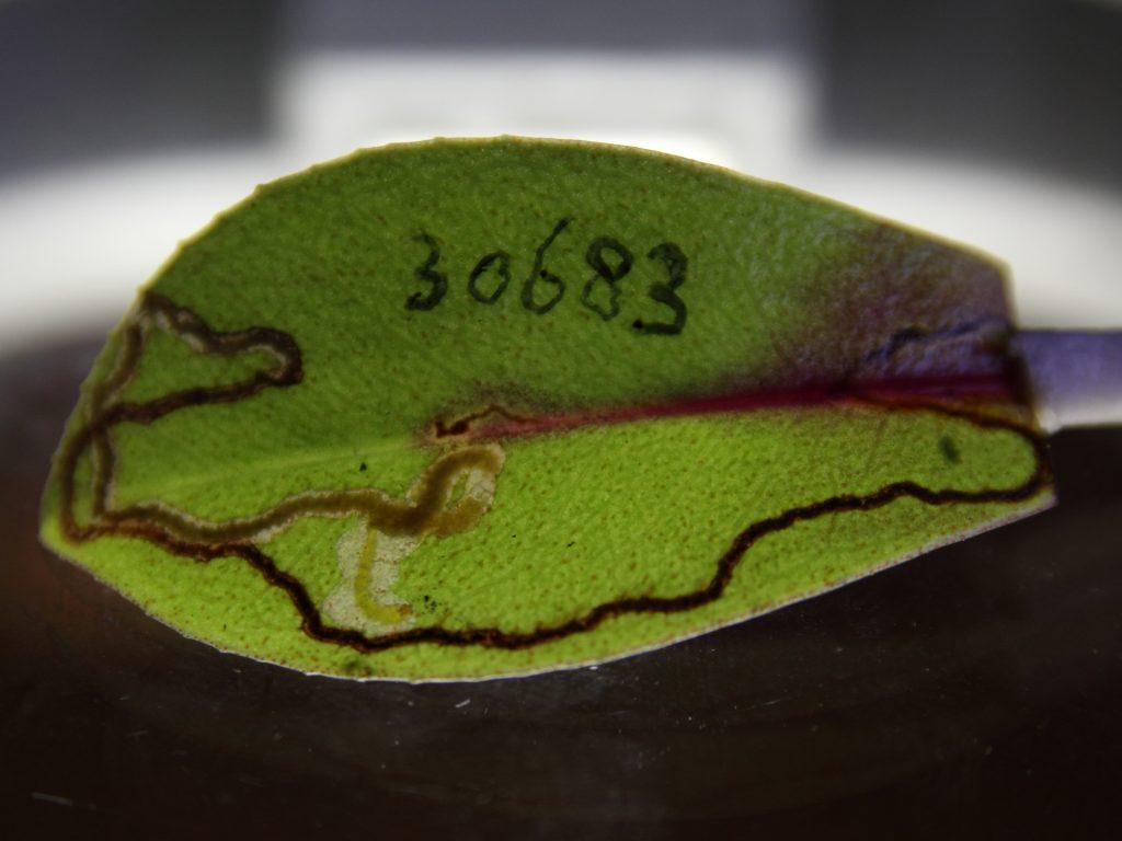 specimen labeled 30683