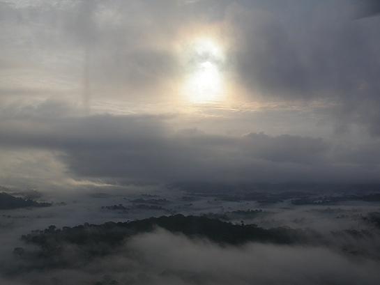 misty rainforest at sunrise
