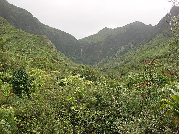 mountain waterfall in rainforest