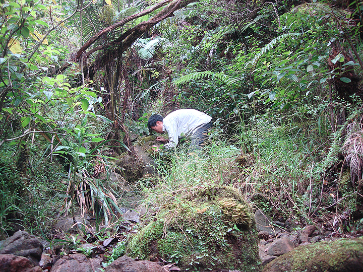 scientist collecting a sample in the forest