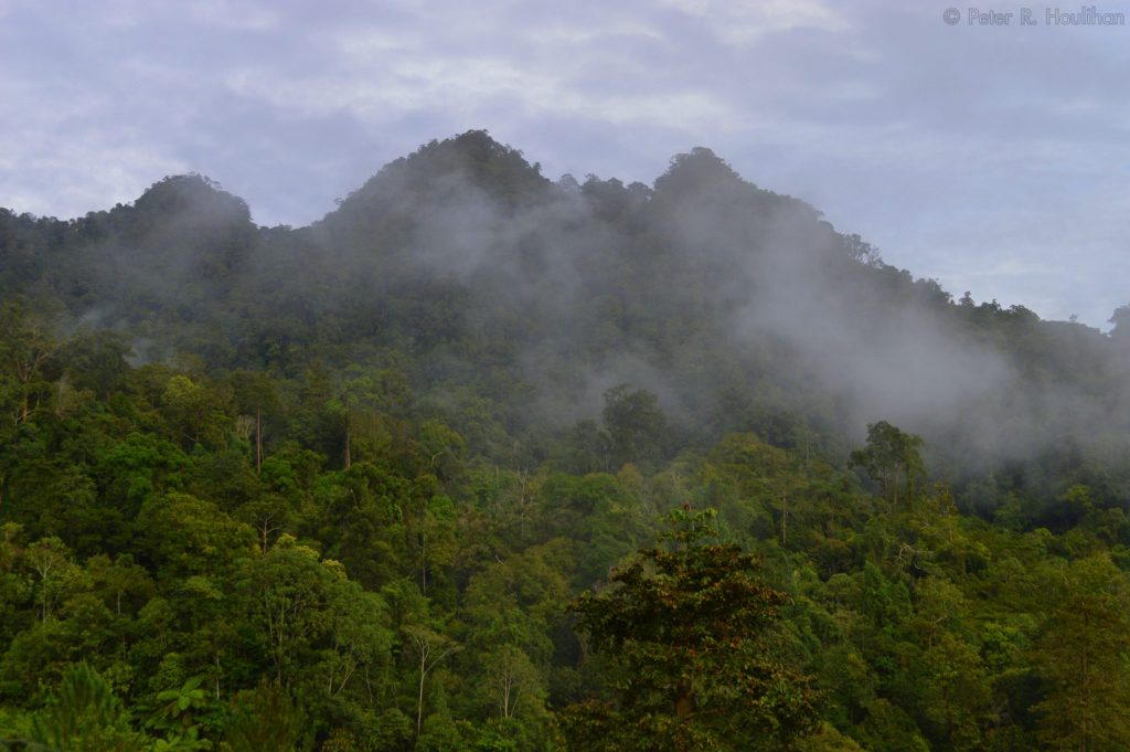 tree covered mountain in Borneo