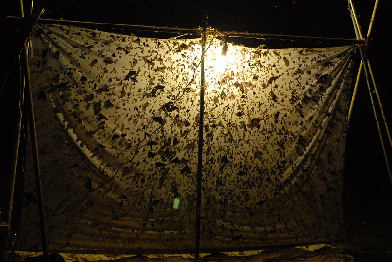 illuminated sheet covered in insects