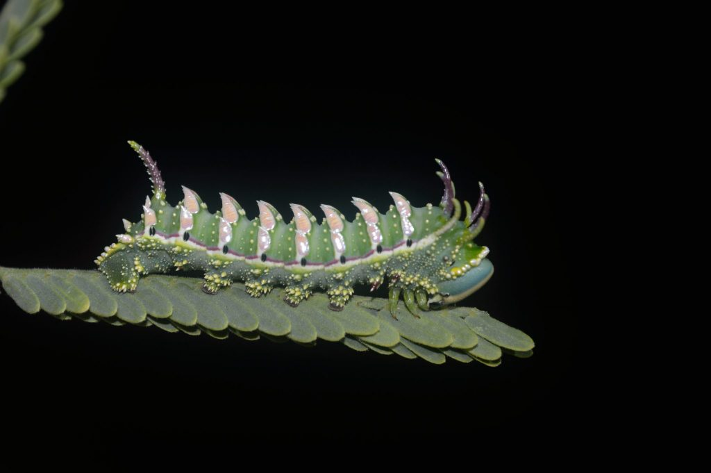 spiky caterpillar standing on a leaf