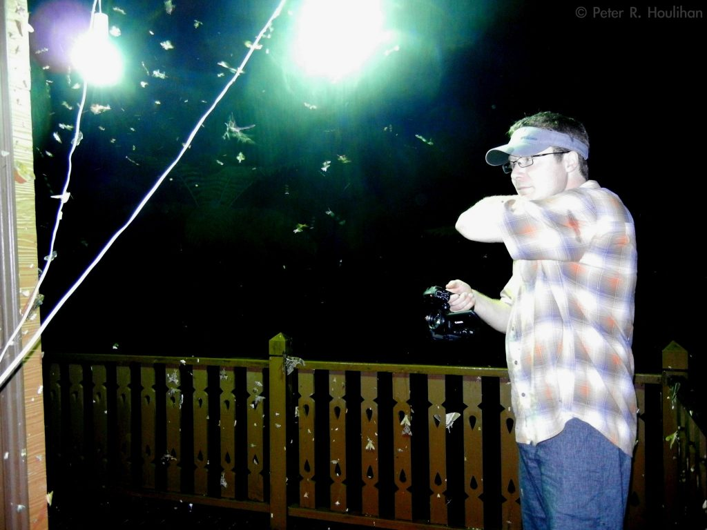 scientist filming bugs flying around lamps at night
