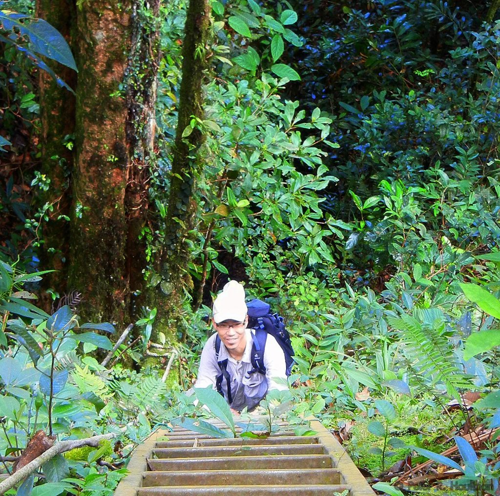 scientist climbing steep stairs in a Bornean jungle