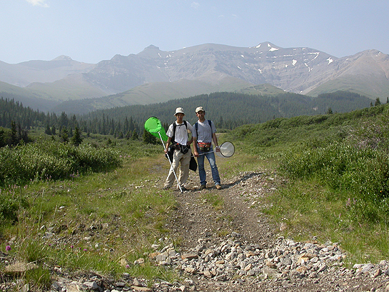 scientists hiking with bug nets in Alberta