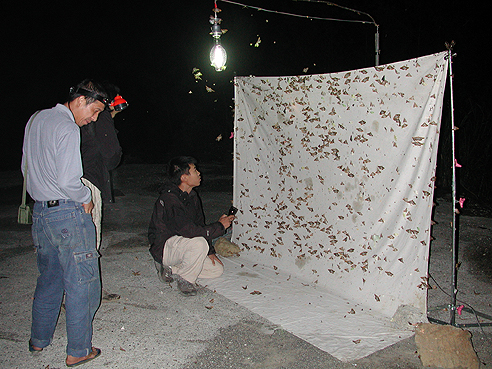 researchers examining moths on an illuminated sheet