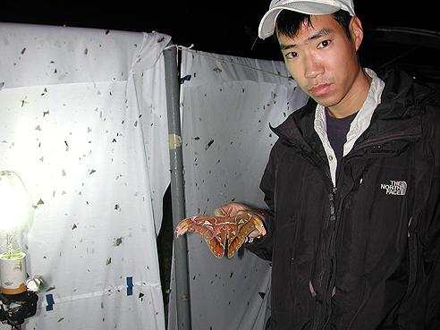 scientist holding orange and white moth